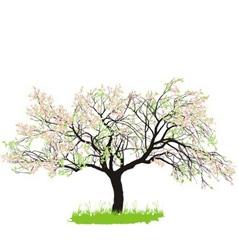 Apple tree in spring vector image