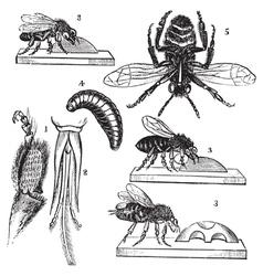 Worker bee vintage engraving vector image