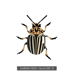 Detailed drawing of the colorado potato beetle vector