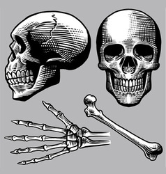Hand drawn human skull set vector
