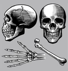 hand drawn human skull set vector image