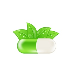 Pills and herbs isolated vector