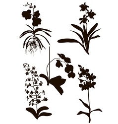 Silhouettes of orchid flowers vector