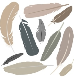 Collection of isolated flat style bird feathers vector image