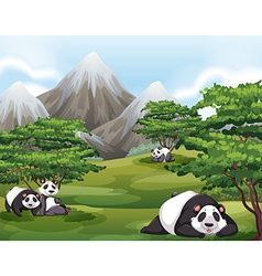 Pandas in forest vector