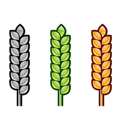 three color corn isolated on the white vector image