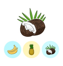 Fruit icons coconut pineapple banana vector