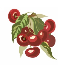 Cherry fruits Watercolor vector image