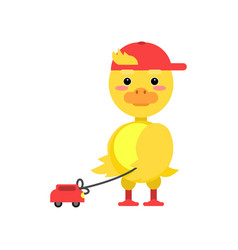 funny little yellow duckling playing with toy car vector image