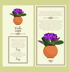 Greeting card with viola plant vector