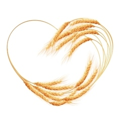 Wheat ears heart isolated eps 10 vector