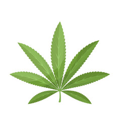 green leaf of hemphippy single icon in cartoon vector image