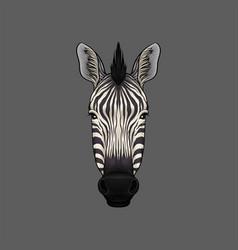 Head of zebra portrait of wild animal hand drawn vector