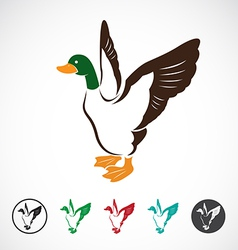 image of an wild duck vector image vector image
