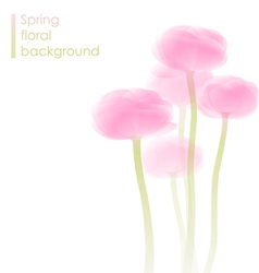 Ranunculus bouquet vector image vector image