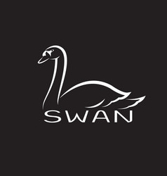 a swan on black background wild animals vector image vector image