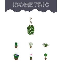 Isometric plant set of blossom tree fern and vector