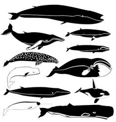 Contours of the whales vector