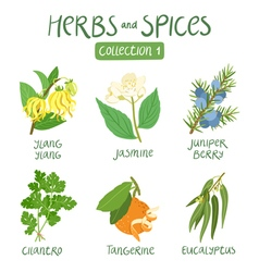 Herbs and spices collection 1 vector image