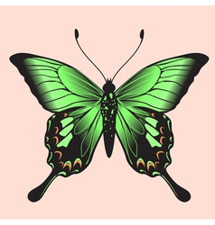 Coloured butterfly vector