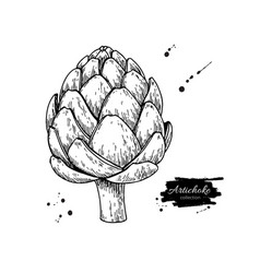 Artichoke hand drawn isolated vector