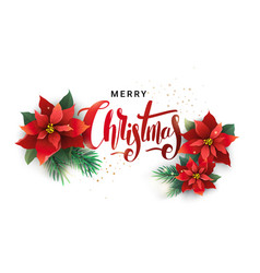 christmas design of fir branches and poinsettia vector image vector image