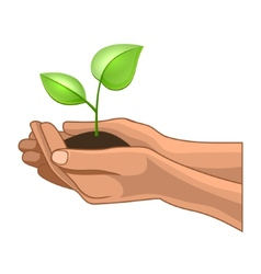 Hands and Plant on White Background vector image vector image