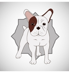 Animal design french bull dog icon isolated vector