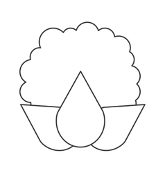 Whole cauliflower icon vector