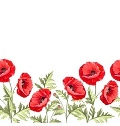 Bunch poppy flowers on a white background vector