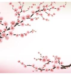flowering branch of Sakura EPS 10 vector image vector image