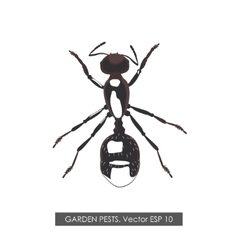 Detailed drawing ant on white background vector image vector image