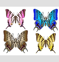 butterfly couples vector image