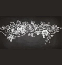 Vine sketch on chalkboard vector