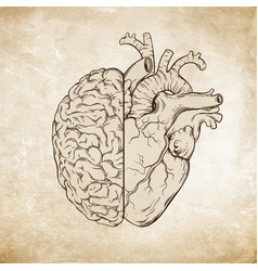 human brain and heart halfs over grunge aged paper vector image vector image