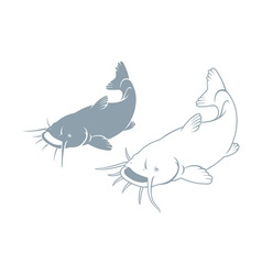 fish catfish vector image