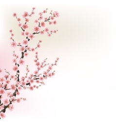 Blooming cherry blossom branches card eps 10 vector