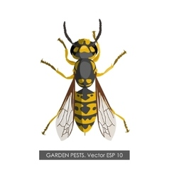 Detailed drawing of wasp on a white background vector