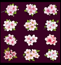 Set of cherry and apple blossom vector