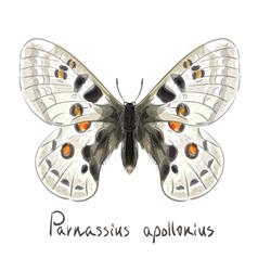 Butterfly parnassius apollonius watercolor vector