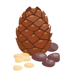 Brown pine cone isolated on white background vector