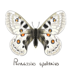 Butterfly parnassius apollonius watercolor vector