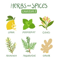 Herbs and spices collection 2 vector