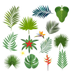 Set of exotic tropical leaves isolated vector