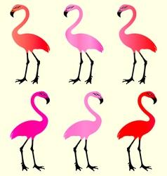 Flamingo 6 Color Variations vector image