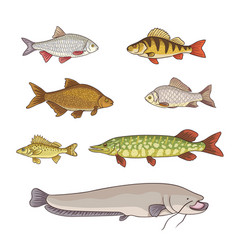 freshwater fishes vector image