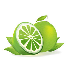 Green lemon fresh isolate fruit vector