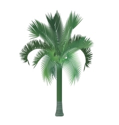 Tropical exotic high detailed palm tree vector