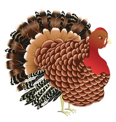 Cartoon turkey bird vector