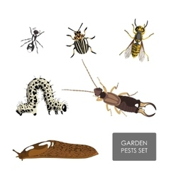 Set of garden pests on a white background vector